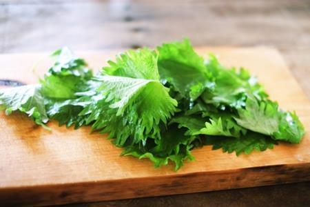 大葉を食べ過ぎたら弊害はあるの?一日の摂取量はどのぐらい?