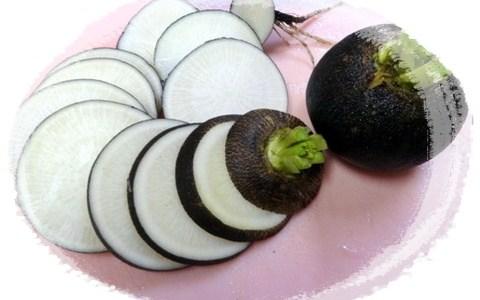 黒丸大根という変わった大根の特徴とオススメの食べ方は?