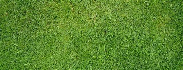 Swiss Grass - Free High Resolution Grass and Leaf Textures