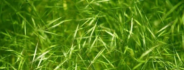 grass 002 - Free High Resolution Grass and Leaf Textures