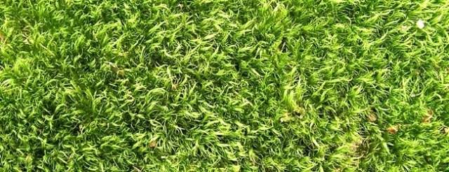 grass texture - Free High Resolution Grass and Leaf Textures