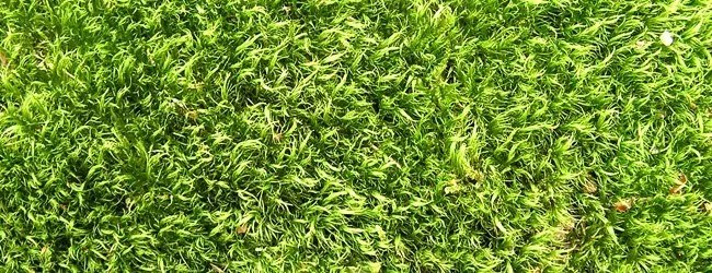 grass texture - Free High Resolution Grass and Leaf Textures