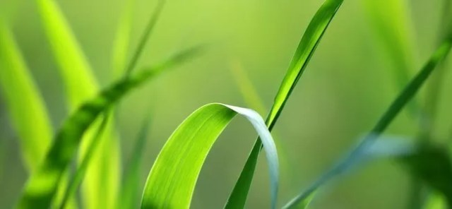 Green stalk - Amazing high resolution wallpapers #2