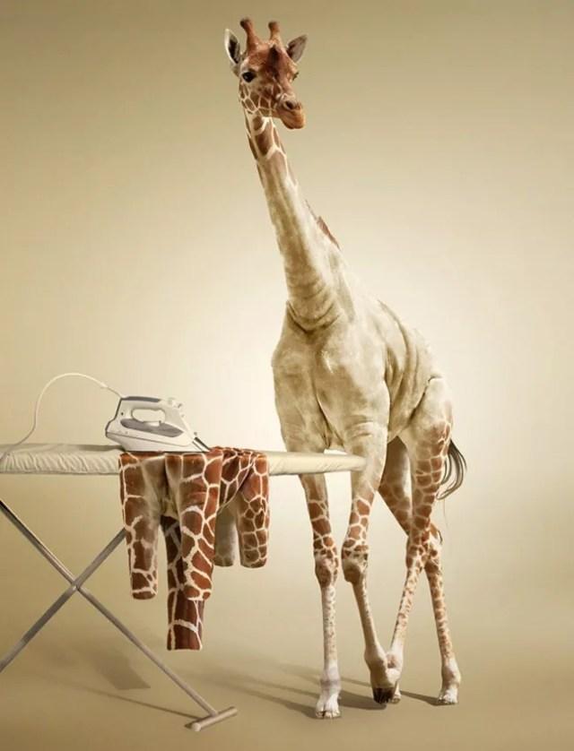 Undress a Giraffe in Photoshop  - 19 Photo Manipulation Tutorials for Photoshop #2