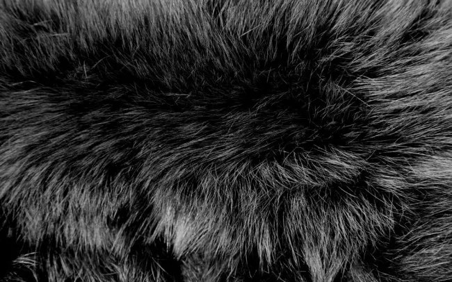 Fur Texture 7 by Dragonfly113 Stock e1328448868684 - 180 FURRY ANIMAL TEXTURES: THE ULTIMATE COLLECTION
