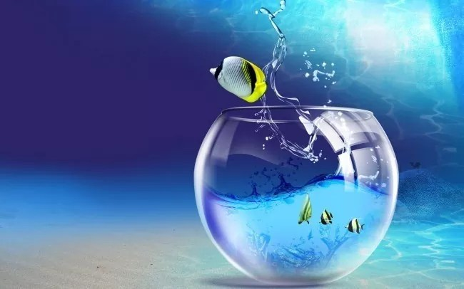 fish outta water 00221175 e1332340726422 - Amazing high resolution wallpapers #3