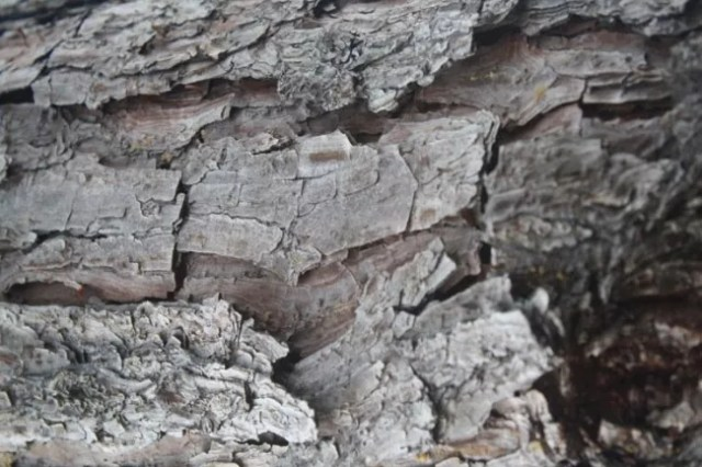 28 High-Res Tree Bark Textures