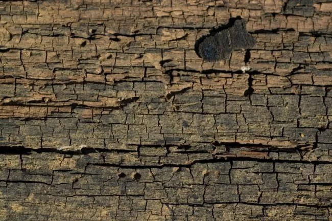 Cracked Wood 1 by objekt stock e1359554411795 - 200+ Free High Quality Grunge Wood Texture