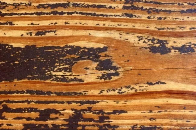 watermark2.php  e1359621201473 - 200+ Free High Quality Grunge Wood Texture