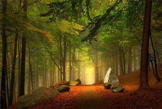 1237 - Goodbye Autumn: Vibrant Silhouettes of Fall