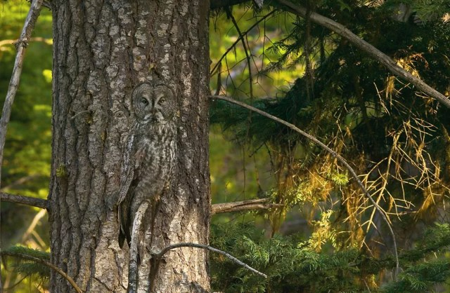 animal camouflage photography art wolfe 1 - Hidden Animals Photos That You Can't Spot