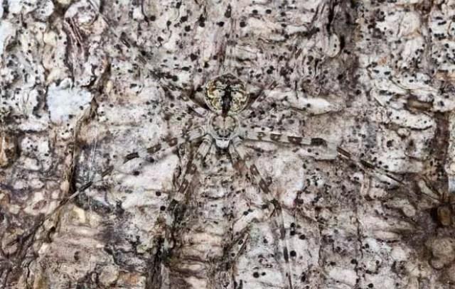 camouflage-spider_1808420i