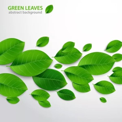 Realistic Vector Leaves - How to Create Realistic Vector Leaves in Illustrator