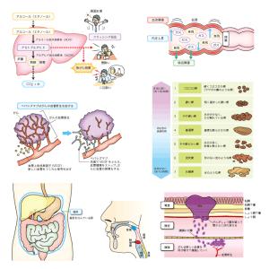 胃腸のしくみ事典(技術評論社)02
