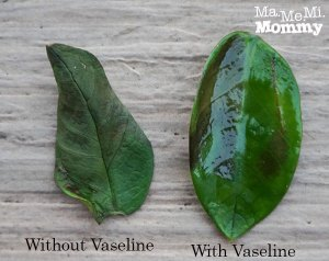 The Healing Power of Vaseline