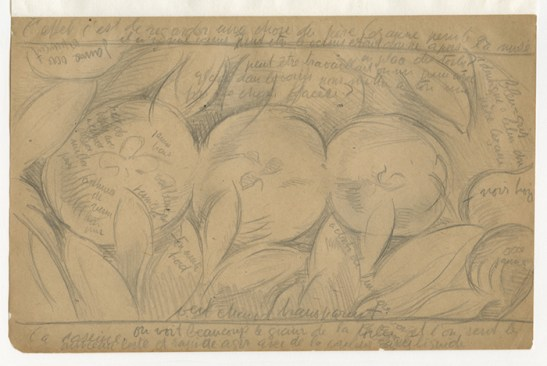 A pencil sketch of three apples in a row surrounded by foliage with many notations by the artist.