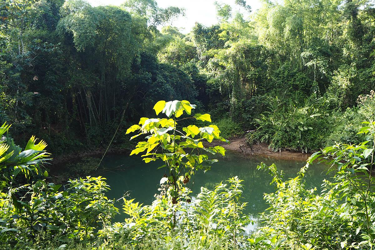 Lagune im Regenwald in Ecuador