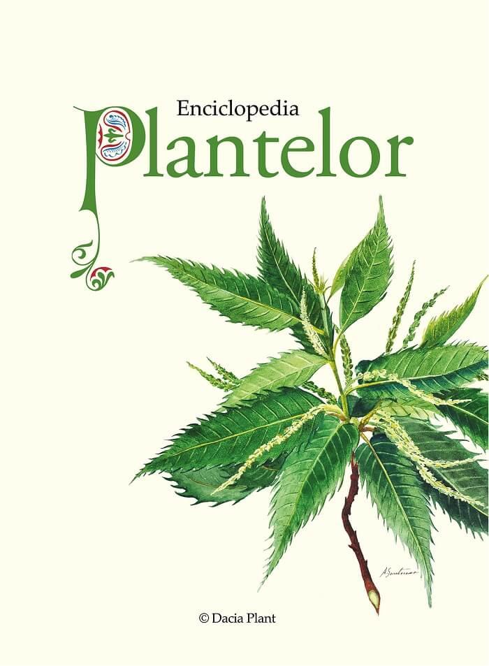 enciclopedia-plantelor