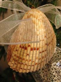 Curiosamente esta concha marina tiene la textura de alguna de las esferas.