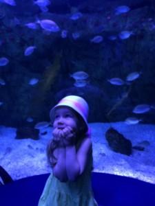 Velikanski akvarij (največji v Evropi) je doživetje za vso družino.