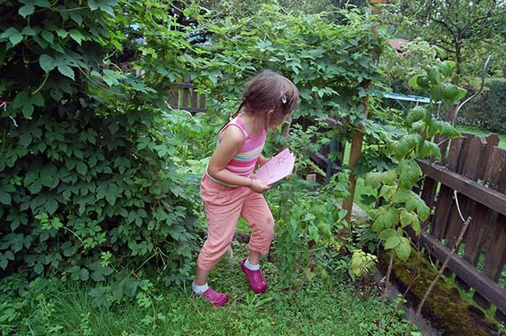 Phantasieentwicklung bei Kindern -Kräuter für die Mama: Hopfen