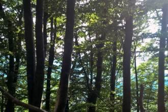 wills du umweltbewusst leben? Zeige deinen Kindern den Wald!