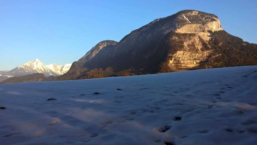 Spuren lesen im Winterwald