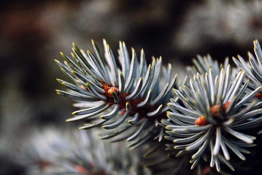 Weihnachtsduft und seine Wirkungen auf unsere Psyche