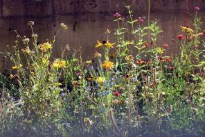 Insektenfreundlicher Garten – Insektensterben abwenden?