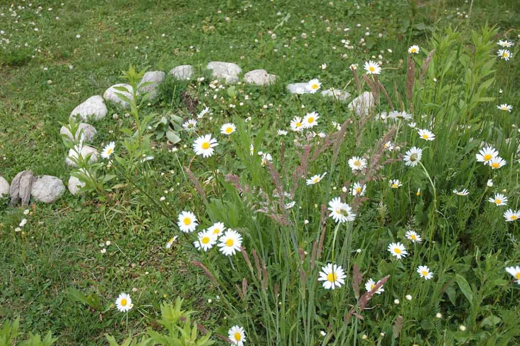 Gartenarbeiten im Mai
