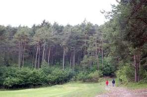 Regenwetter in den Bergen: Ab in den Wald