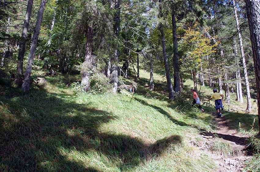 Mit Kindern raus in die Natur - Wanderung zur Walderalm