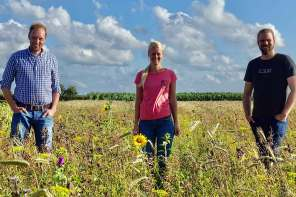Blumen vom Feld als Blühstreifen verschenken: Wilde Pracht