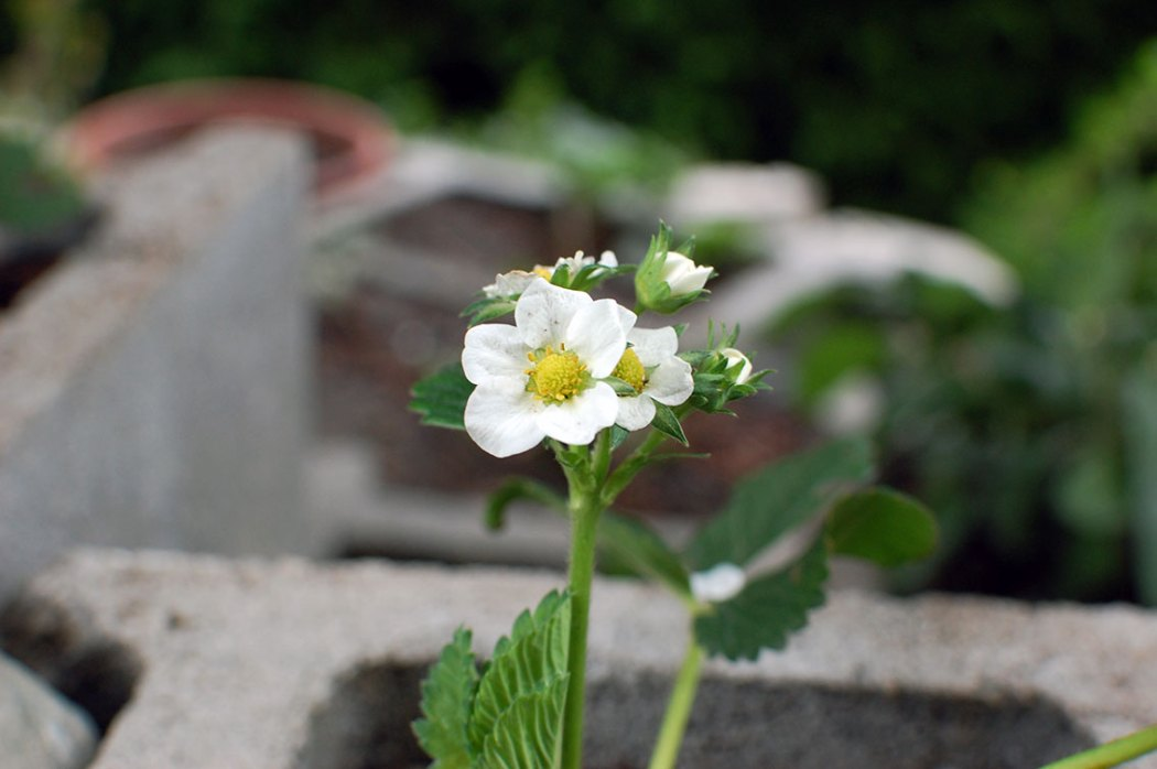 Garten im Mai