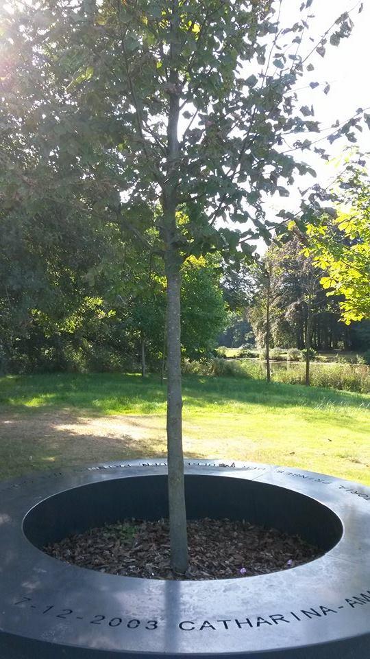De Amaliaboom, de pronkzaal van Oranje