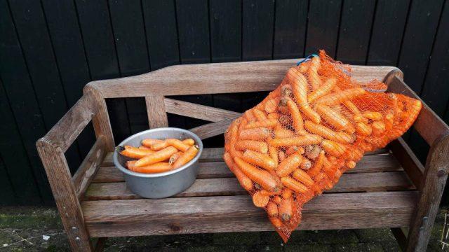 We hebben weer wortels, winterpeen