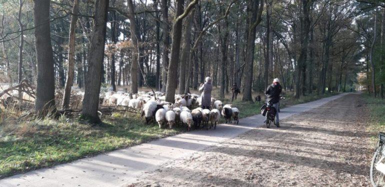 De 10 mooiste wandelingen in het Dwingelderveld