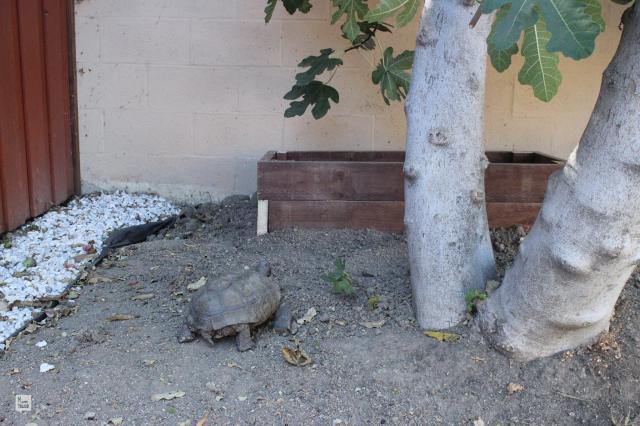 Tortoise Home