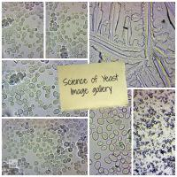 Science of Yeast Image Gallery