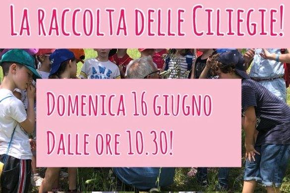 La-raccolta-delle-ciliegie-Zanotti-Gusto-&-Passione-Loreto-Aprutino-Pescara