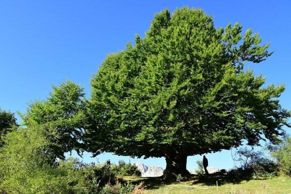 Cosa-ci-raccontano-le-piante-laboratorio-Parco-Nazionale-dAbruzzo-Pescasseroli-LAquila