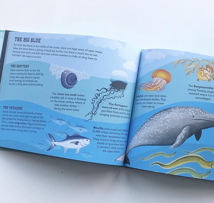 The Sea Book by Charlotte Milner on mammafilz.com