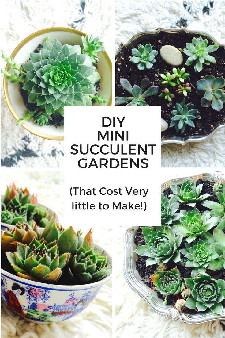DIY Mini Succulent Gardens - Mamma Mode