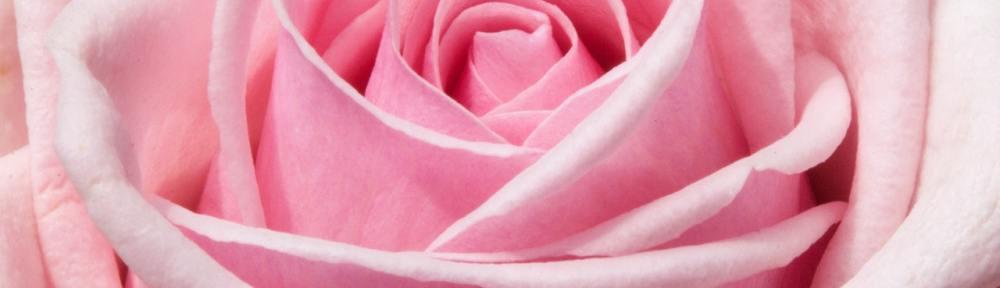 potatura rose