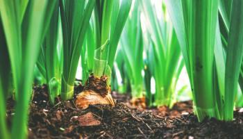 trapiantare piante da vaso a terra