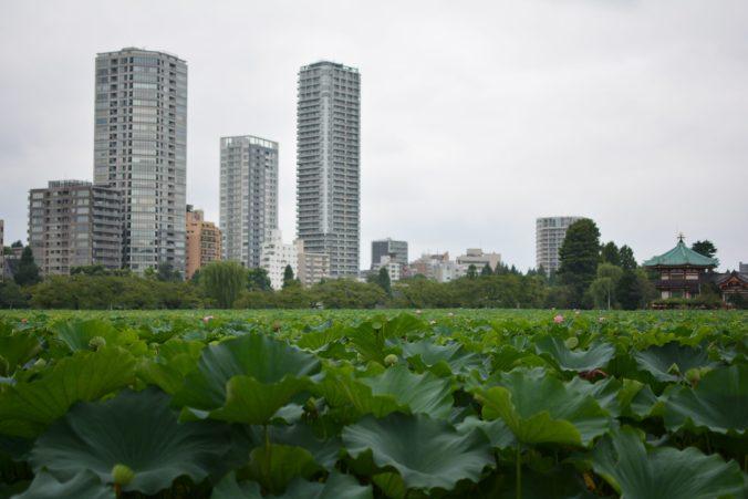 cosa vedere in Giappone : il parco Ueno