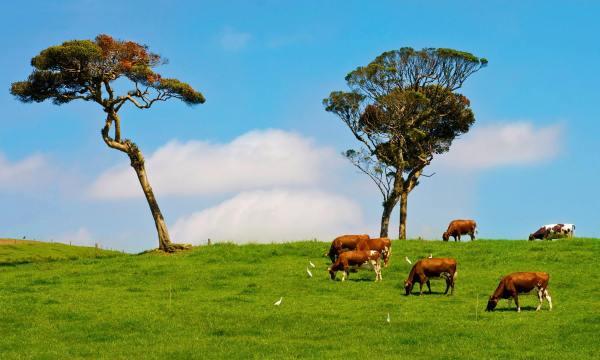 Beautiful Earth, Sri Lanka