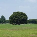 昭和記念公園 こどもの森と水の池の楽しみ方