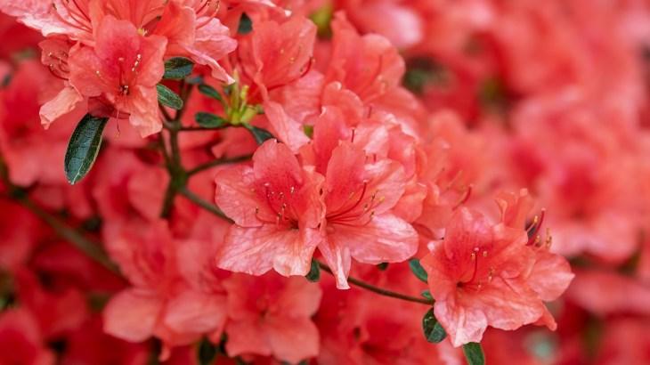 花・植物の漢字読み方一覧と難読漢字問題