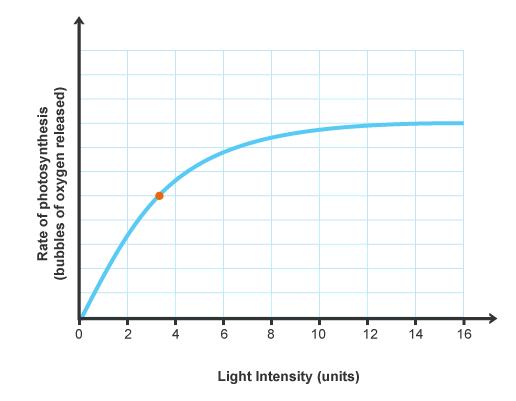 光合成速度